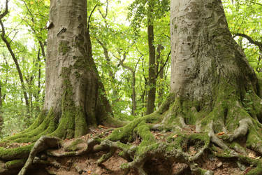 Forest Stock 100 by Malleni-Stock