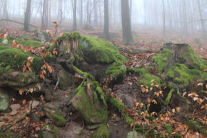 Fog Stock 07 by Malleni-Stock