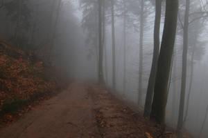 Fog Stock 24 by Malleni-Stock