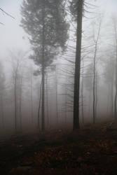 Fog Stock 34 by Malleni-Stock