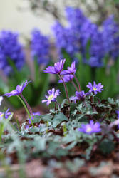 Spring Stock 43 by Malleni-Stock
