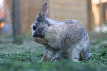 Rabbit Stock 05 by Malleni-Stock