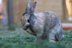 Rabbit Stock 08 by Malleni-Stock