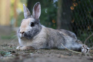 Rabbit Stock 04 by Malleni-Stock