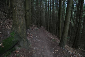 Palatinate Forest Stock 32 by Malleni-Stock