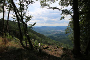 Palatinate Forest Stock 27 by Malleni-Stock