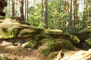 Palatinate Forest Stock 56 by Malleni-Stock