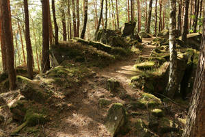 Palatinate Forest Stock 57 by Malleni-Stock