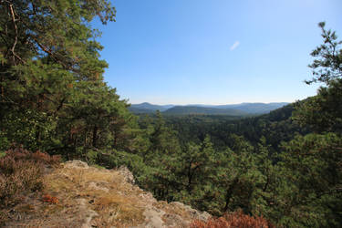 Palatinate Forest Stock 62 by Malleni-Stock