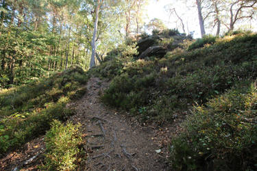 Palatinate Forest Stock 65 by Malleni-Stock