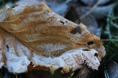 Frozen leaf Stock 02 by Malleni-Stock