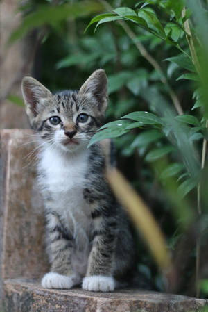 Cat Stock 127 by Malleni-Stock
