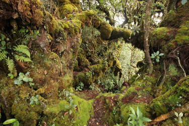 Mossy forest Stock 29 by Malleni-Stock