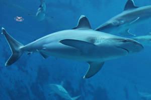 Shark Stock 03 by Malleni-Stock