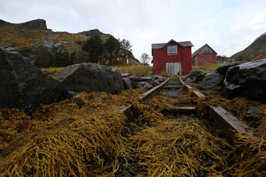 Norway Stock 015 by Malleni-Stock
