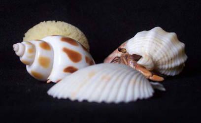 Hermit Crabs by DarkAngelsRaven
