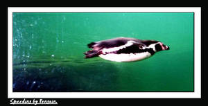 speeding by penguin.. VROOOM.. by CH3-CO-O-CH3
