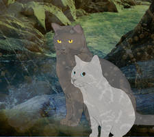 Graystripe and Silverstream by thistlesis