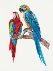 The Macaws by zephyrxavier
