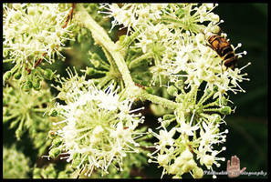 Bee and Ant by philinchilin