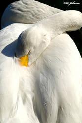 Swan downtown orlando FL by philinchilin
