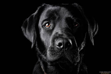 The Black Lab II by Wordup