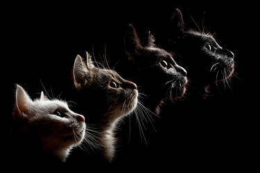 4 cats by Wordup