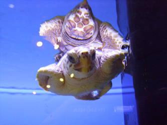 Turtle swim by KnightWolvez