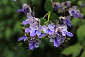 Butterfly flower by Lunnika-Horo