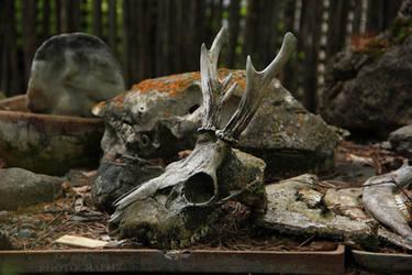 Skull by Lunnika-Horo