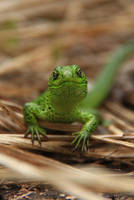 Satisfied lizard by Lunnika-Horo
