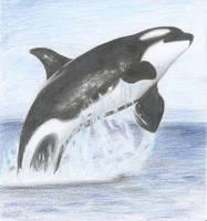 Orca by SilentRavyn