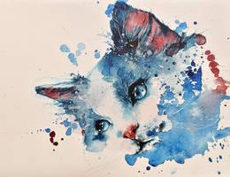 Cat by rokkihurtta
