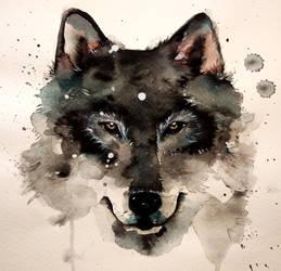 Wolf by rokkihurtta