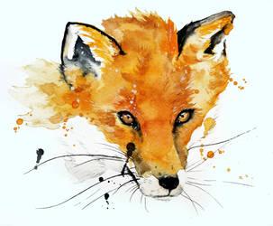 Fox by rokkihurtta