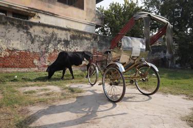 Cow grazing next to rickshaw by SandmanDreamzZz