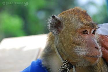 Monyet Ekor Panjang by gat0t