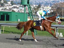 Golden Gate Fields - Racers 40 by Nyaorestock