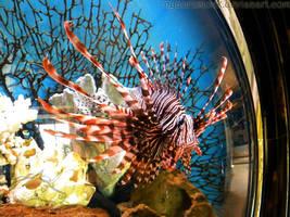 Lionfish - 02 by Nyaorestock