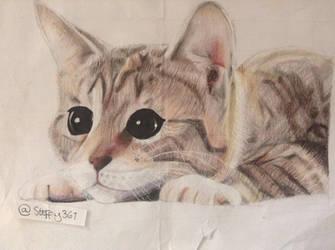 C: Kitten by steffy367