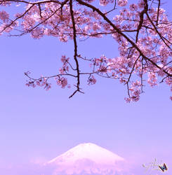 Cherry Blossom and Mt. Fuji by Sakura060277