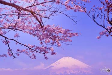Cherry Blossom and Mt. Fuji Wallpaper 2 by Sakura060277