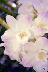 Flower by Sakura060277
