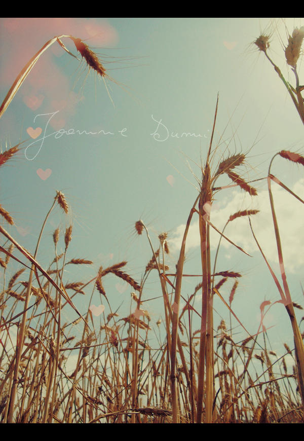 our land of joyness by antique-wall