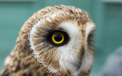 Owl by Henrikson
