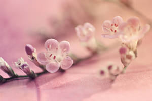 Pour toi II by JunnyPhotography
