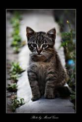 Cat Potrait 04 by MuratGezer