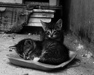 Cats From Streets -Little Kitties by MuratGezer