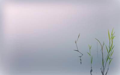 The Light of Zen by it-s