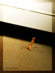 Mantis Neighbour by LightningIsMyName